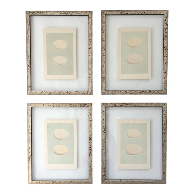 Framed Antique Morris Egg Prints - Set of 4 For Sale