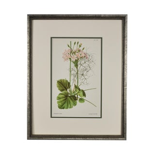1950s Vintage Original Framed Flower Botanical Print For Sale