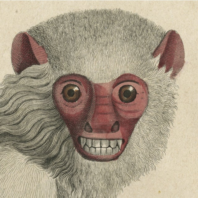 Vintage Monkey Archival Print - Image 5 of 5