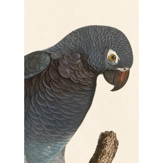 Jacques Barraband Grey Parrots Framed - Set of 4 For Sale - Image 9 of 12