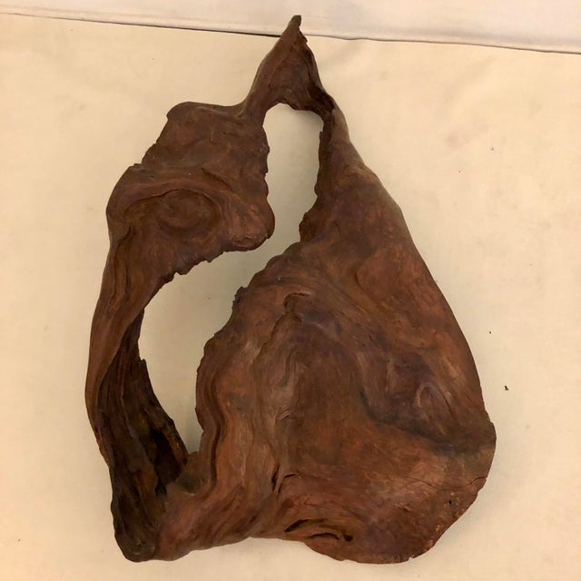 Sienna Redwood Naturally Formed Sculpture For Sale - Image 8 of 11