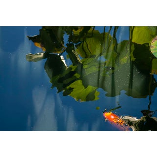 Waterlily Reflection 02 Photograph For Sale