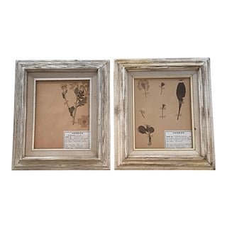 20th Century French Framed Herbier Pressed Botanicals - A Pair For Sale
