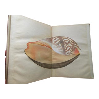 "Antiquarian Books:""The Illustrations of a Thousand Shells"" Vols. I &Amp; II-Color Woodblock Prints For Sale"