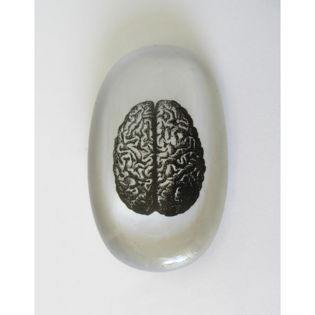 Glass Art Paperweight With Image of Brain For Sale - Image 13 of 13