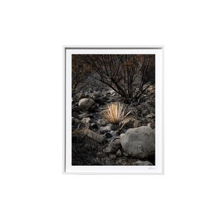 "Timothy Hogan ""Yucca"" Original Framed Color Landscape Photograph, 2017 For Sale"