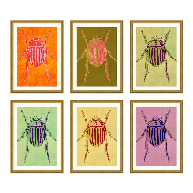 Striped Beetle Set of 6 by Jessica Molnar in Gold Frame, Small Art Print For Sale