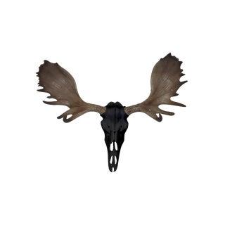 Wall Charmers Alberta Faux Black + Natural Antlers Resin Moose Head Skull