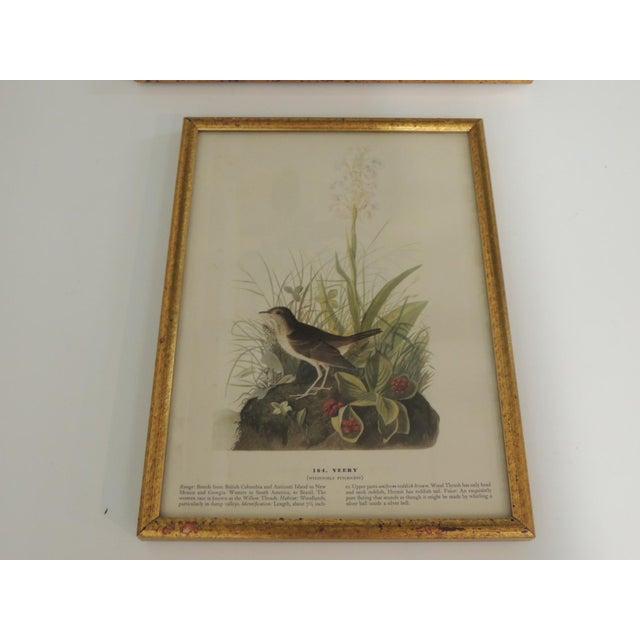 Boho Chic Set of 3 Bird Prints Framed in Gold Frames For Sale - Image 3 of 7