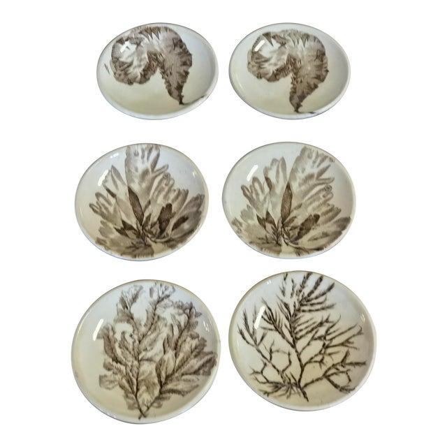 Brown Transferware by Wedgewood, seaweed pattern For Sale