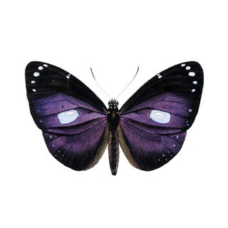 Deep Purple Butterfly Art For Sale