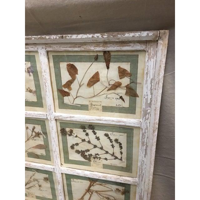 Wood Vintage Italian Framed Botanical Herbarium Wall Hanging For Sale - Image 7 of 12