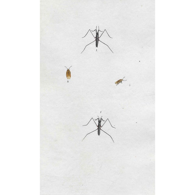 Antique British Insect Engraving For Sale