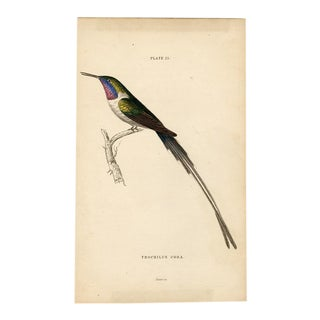"""""""Trochilus Cora"""", 19th Century Hand-Colored Steel Engraving For Sale"""