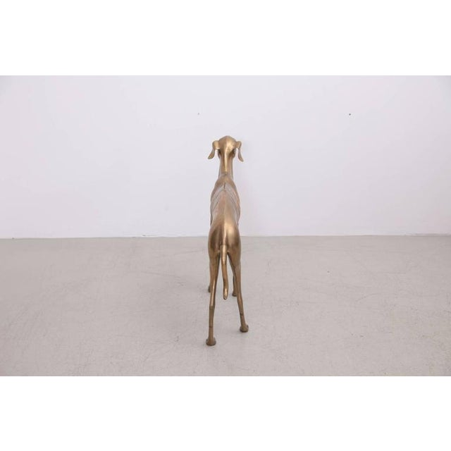 Extraordinary Huge Brass Dog or Greyhound, 1960s For Sale - Image 4 of 7