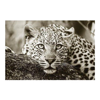 Black and White Acrylic of African Leopard For Sale