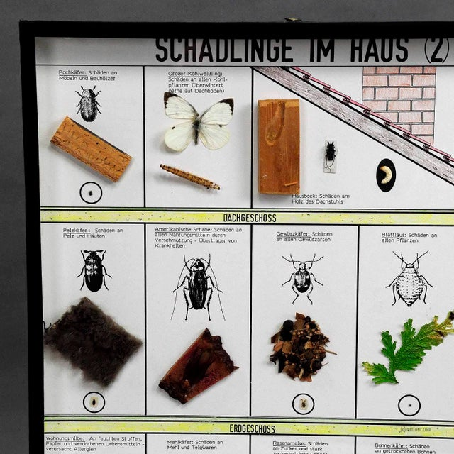 a vintage school teaching showcase with household pests specimen behind glass. used as teaching material in German schools...