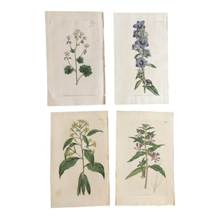 Set of Four William Curtis Hand-Colored Engravings of Botanical Studies