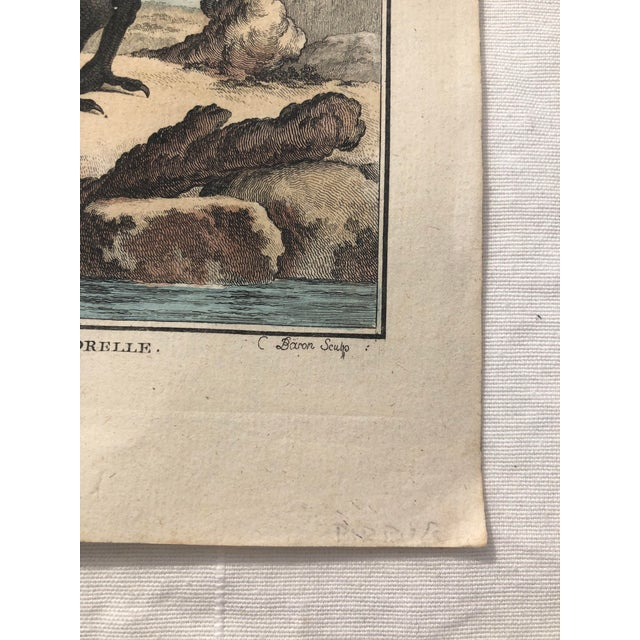 18th Century French Bird Engraving Signed by Jacques De Sève Featuring an Eurasian Coot For Sale - Image 9 of 13