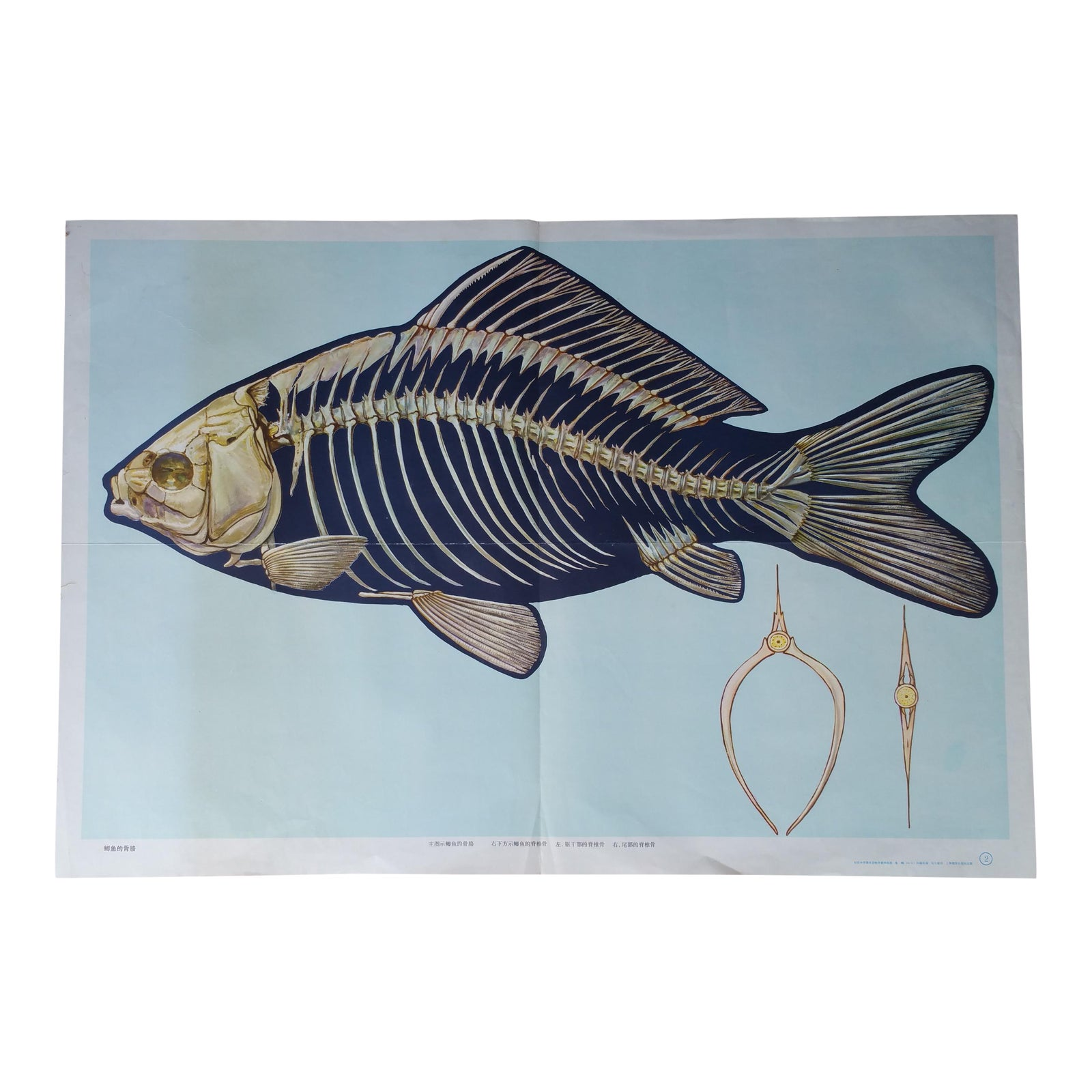 Vintage Fish Anatomy Poster | Chairish