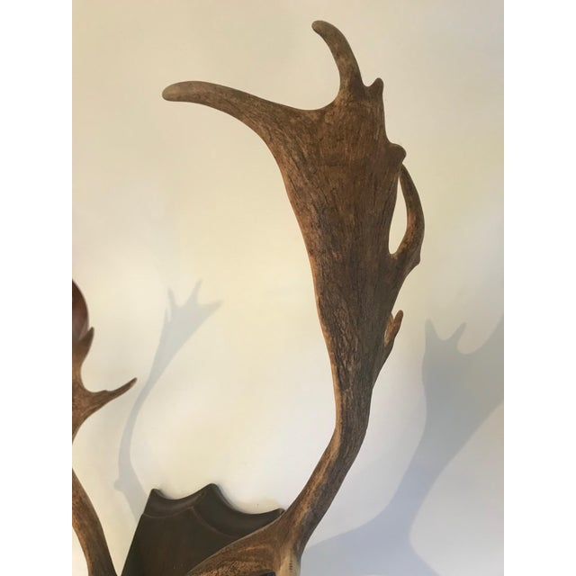 Antler 19th Century Black Forest Red Stag Antlers Mounted on Shield Shaped Plaque For Sale - Image 7 of 13