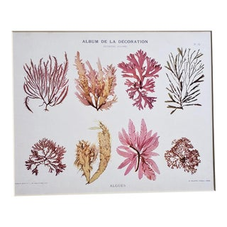C1900 French Lithograph of Algae For Sale
