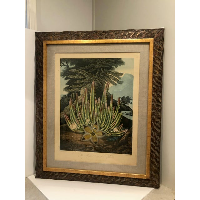 19th Century Boho Chic Succulent Botanic Print For Sale - Image 12 of 12
