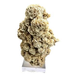 Desert Rose Selenite on Acrylic Base For Sale