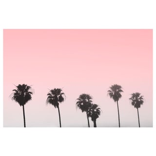 Pink Palm Tree Sky Photograph For Sale