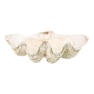 Giant Scalloped Clam Shell Centerpiece For Sale