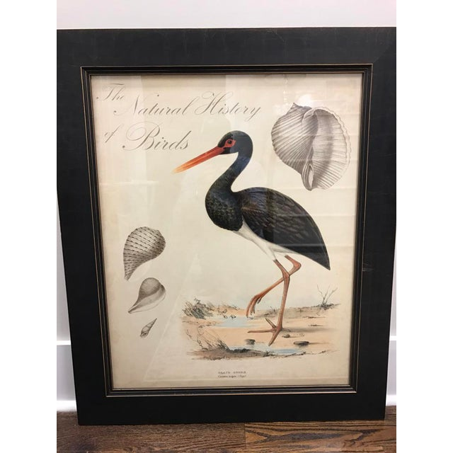 Shell and Stork Beach Prints - A Pair - Image 3 of 11