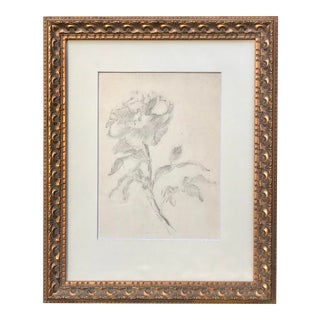 Antique Drawing of a Flower by Charles Sheldon For Sale