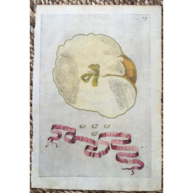 Antique Ferrari Botanical Citrus Fruit Print - Image 2 of 4