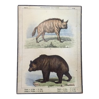 19th Century Lithographed French Naturalist's Chart of a Bear & a Hyena
