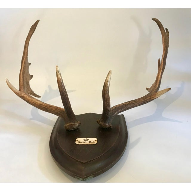 19th Century Black Forest Red Stag Antlers Mounted on Shield Shaped Plaque For Sale - Image 4 of 13