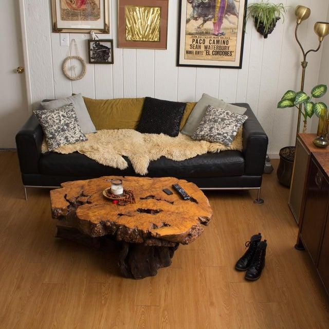 Live Edge Maple Burlwood Coffee Table For Sale - Image 10 of 11