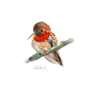 Rufus Hummingbird 8x10 Giclee Print, Watercolor. For Sale