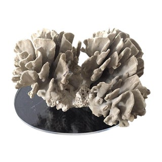 Large Natural Coral on Lucite Base