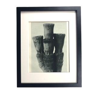Framed Antique Photogravure Blossfeldt Botanical Print - No. 5 For Sale