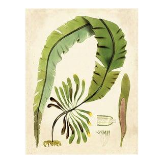 Harvey Seaweeds 11, Unframed Artwork For Sale