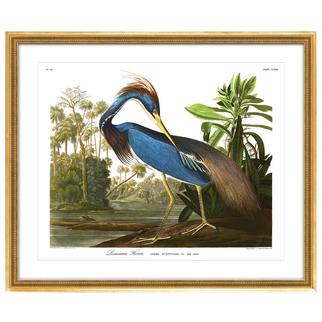 Soicher Marin Louisiana Heron Gold Framed Audubon Print - Image 1 of 4