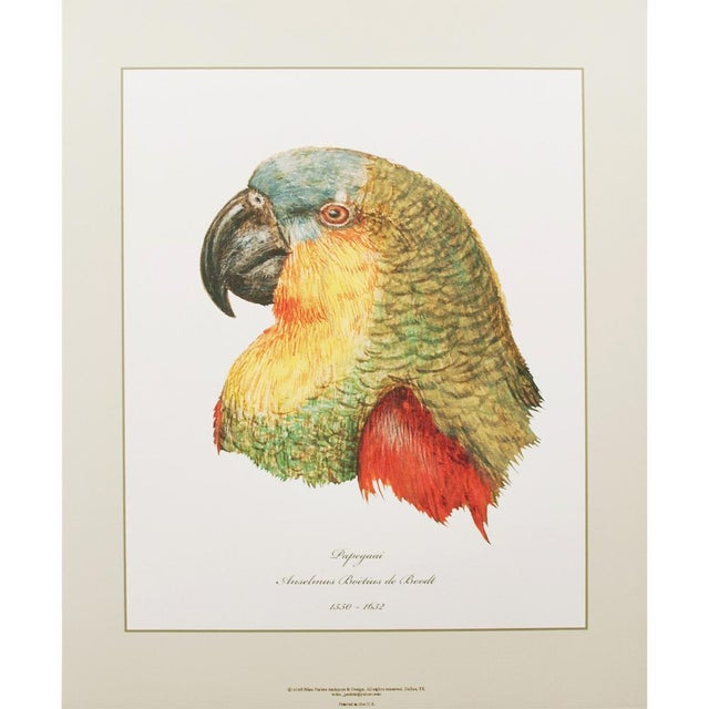 Large 16-18th C. Parrot Head Study Prints - Set of 6 For Sale In Dallas - Image 6 of 10