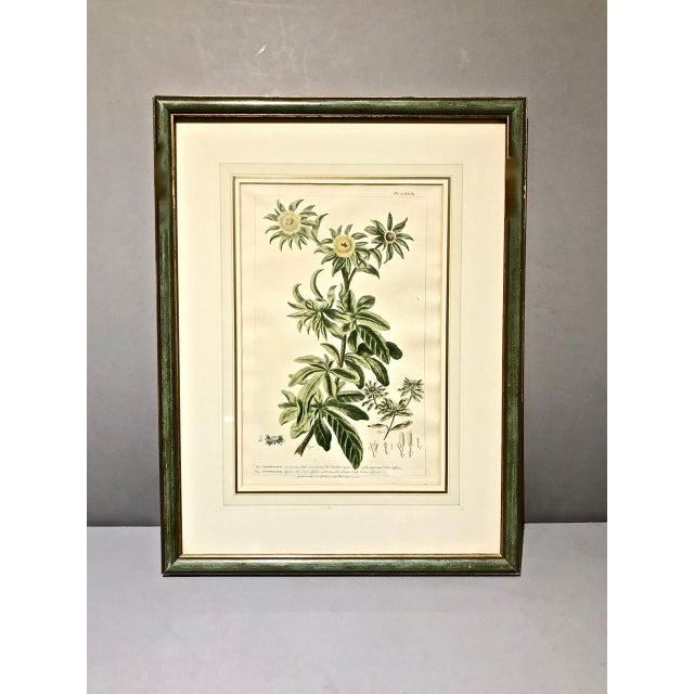 This is a good set of 4 English hand-colored botanical engraving by P. Miller that date to the mid-18th century. The...