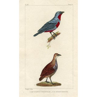 South American Bird Print, 1831 For Sale