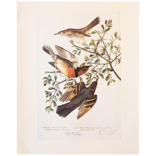1960s Sage Thrasher, Mountain Mockingbird, and Varied Thrush Print by Audubon For Sale