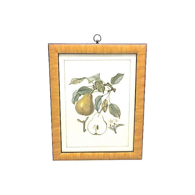 Late 20th Century Late 20th Century Pear & Branch Engraving Print For Sale - Image 5 of 5