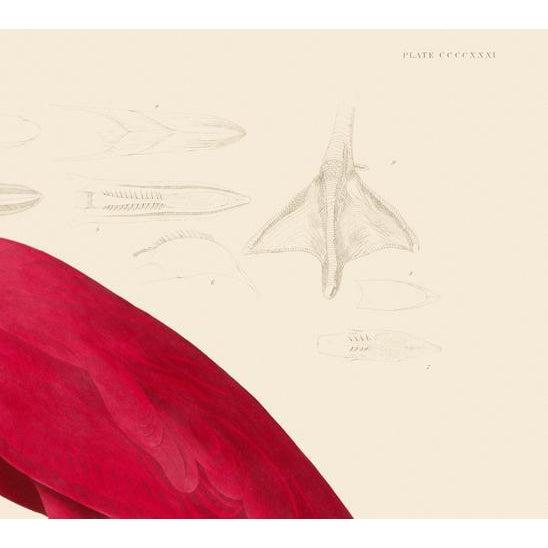 2020s John James Audubon Print, American Flamingo For Sale - Image 5 of 6