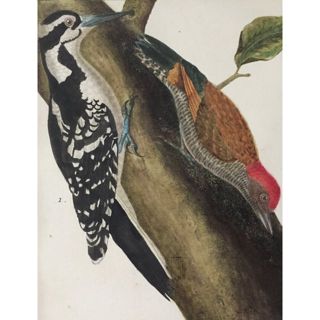 18th-C. Martinet Ornithological Engraving For Sale - Image 4 of 6