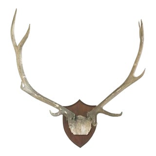 Caribou Wall Mounted Antlers