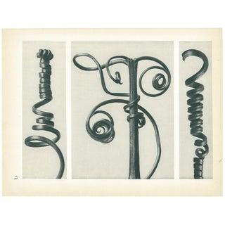 1928 Karl Blossfeldt Original Period Photogravure N53 of Cucurbita For Sale